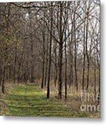 Path Of The Trees Metal Print