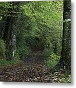 Path Through The Woods Inistioge Metal Print