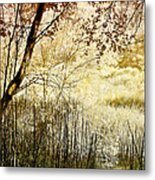 Path To The Meadow Metal Print
