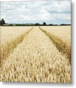 Paths Carved In Field Of Tall Wheat Metal Print