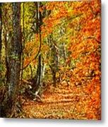 Pathway Through Autumn Woods Metal Print by Cheryl Davis