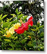 Paute Farm Flowers Metal Print
