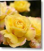Peace Rose 2 Metal Print