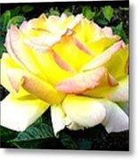 Peace Rose- Okanagan Valley Metal Print