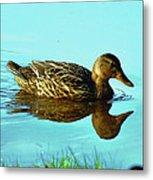 Peaceful Duck - 0993c2502e Metal Print