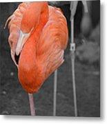 Peaceful Flamingo Metal Print