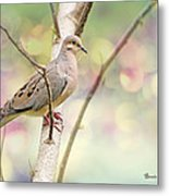 Peaceful Mourning Dove Metal Print