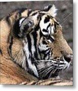 Peaceful Tiger Metal Print