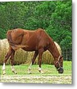 Peacefully Grazing Metal Print