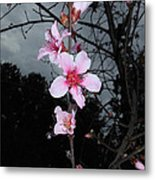 Peach Blooms Metal Print