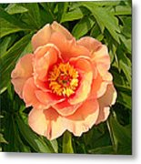Peachy Blush Metal Print