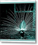 Peacock Blues Tail Metal Print