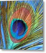 Peacock Glory Metal Print
