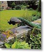 Peacock In Formal Garden, Kilmokea, Co Metal Print