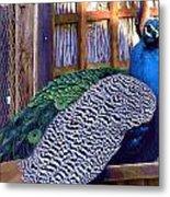 Peacock Roosts Metal Print