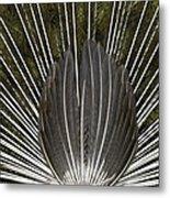 Peacock Tail Graphic Metal Print