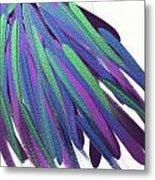 Peacock Wig Metal Print