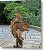 Peanuts For Lunch Metal Print