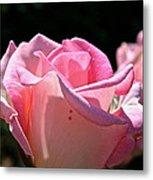 Pearl Pink Petals Metal Print