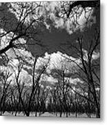 Pecan Trees Metal Print