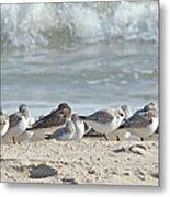 Peeps At The Beach #2 Metal Print