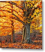 Peggy's Woods Metal Print