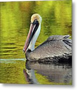 Pelican On A Golden Pond Metal Print