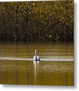 Pelican On Golden Pond Metal Print