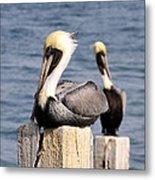 Pelican Pair Metal Print