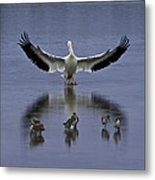Pelican Protector - Florida Wildlife Scene Metal Print