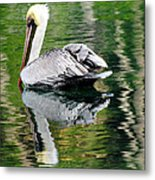 Pelican Reflecting Metal Print