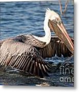 Pelican Take Off Metal Print