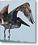 Pelican V Metal Print