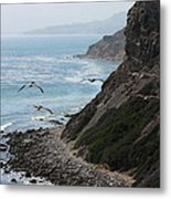 Pelicans Colony Flying Over Cliff Metal Print