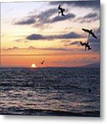 Pelicans Diving At Sunset Metal Print