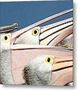 Pelicans (eyes Have It) Metal Print by An Gobán Saor