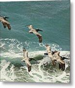 Pelicans In Flight Over Surf Metal Print by Gregory Scott