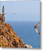 Pelicans Off The Point Metal Print