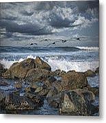 Pelicans Over The Surf On Coronado Metal Print