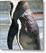 Penguin 13 Metal Print