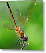 Pennant Dragonfly Obilisking Metal Print
