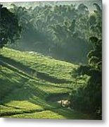 People Walking Through Lujeri Tea Metal Print