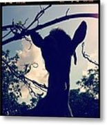 Pepper The Goat Metal Print