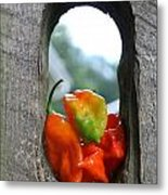 Peppered Fence Metal Print