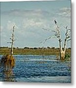 Perched Up High Metal Print