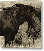 Percheron Prairie Horses Metal Print