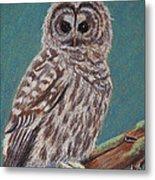 Perching Spotted Owl Metal Print by Thomas Maynard