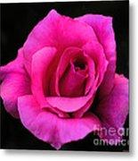 Perfect Rose Metal Print
