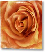 Perfection In Peach Metal Print