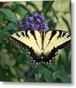Perfectly Aligned Butterfly On Butterfly Bush Metal Print